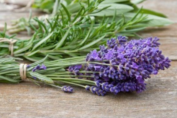 16614098-herb-bouquet-with-lavender-rosemary-thyme-sage